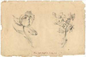 Marína kresby kvrocv