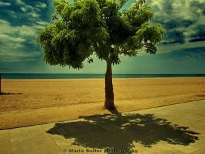 Šefferpvá strom