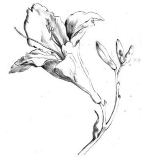 Lvet Marímy